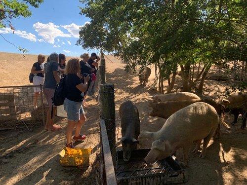 I maiali allevati all'aperto dei Fratelli Pira