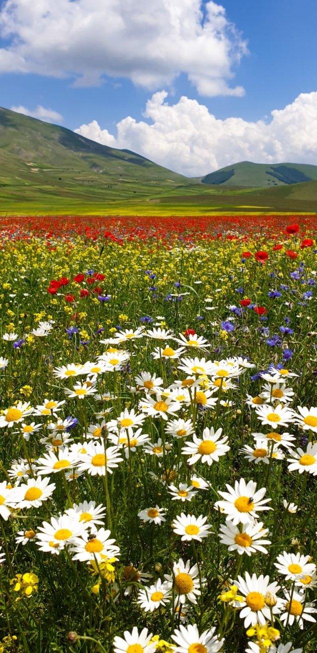 La fioritura a Castellucchio di Norcia